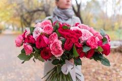 Grande mazzo luminoso di lusso nelle mani di una ragazza sveglia Cento rose del giardino, varietà di David Austin Tre generi fotografia stock