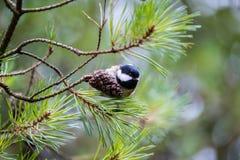 Grande melharuco fêmea na árvore Fotografia de Stock