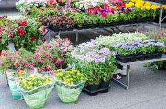Grande mercato della pianta e dell'erba immagine stock