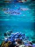 Grande mergulho autônomo do recife de coral Imagens de Stock