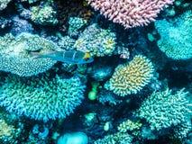 Grande mergulho autônomo do recife de coral Foto de Stock Royalty Free