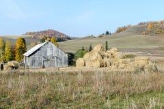 Grande meule de foin près d'un vieux hangar en bois contre les collines et le bois Photo stock