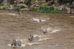 Grande migração em Kenya Masai mara, Serengeti, África Fotografia de Stock