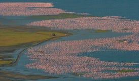 Grande moltitudine di fenicotteri sul lago Presa delle immagini con la veduta panoramica kenya l'africa Nakuru National Park Na d immagine stock