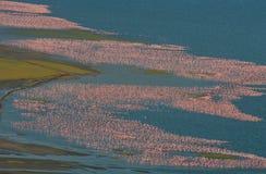 Grande moltitudine di fenicotteri sul lago Presa delle immagini con la veduta panoramica kenya l'africa Nakuru National Park Na d Fotografia Stock Libera da Diritti