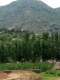 Grande montagna e grandi alberi Immagini Stock Libere da Diritti
