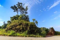 Grande montagne d'arbre avec le ciel bleu Image stock