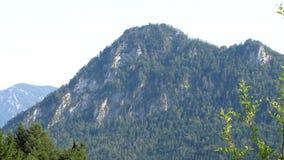 Grande montagne et la forêt verte banque de vidéos