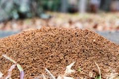 Grande monte da formiga mounded na terra Fotos de Stock Royalty Free