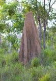 Grande monticello della termite Fotografia Stock