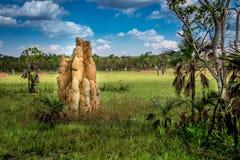 Grande monticello della termite in un campo dei monticelli della termite Immagini Stock Libere da Diritti