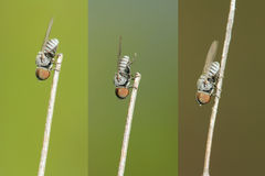 Grande mosca capa Immagine Stock Libera da Diritti