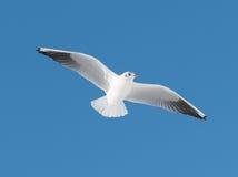 Grande mouche blanche d'oiseau Images stock