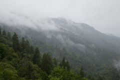 Grande Mtns fumarento Nat. Parque, TN-NC Foto de Stock Royalty Free