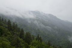 Grande Mtns fumoso nazionale. Sosta, TN-NC Fotografia Stock Libera da Diritti