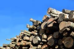 Grande mucchio dei ceppi di legno contro cielo blu Immagini Stock