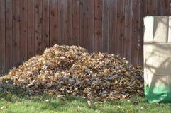 Grande mucchio delle foglie di acero Immagine Stock Libera da Diritti
