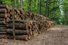 Grande mucchio di legno nella foresta Fotografia Stock Libera da Diritti