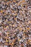 Grande multidão do estádio fotografia de stock royalty free