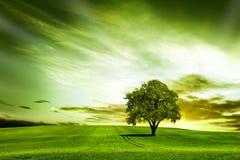 Grande nature au coucher du soleil Photo libre de droits