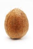 Grande noce di cocco isolata Immagine Stock Libera da Diritti