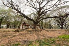 Grande ombra dell'albero sulle strutture storiche del giardino nelle profondità di bello parco Fotografia Stock