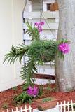 Grande orchidée pourpre Images stock