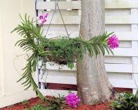 Grande orchidée pourpre Images libres de droits