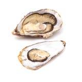 Grande ostrica Fotografia Stock Libera da Diritti