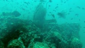 Grande pacchetto dei pesci tropicali sopra una barriera corallina stock footage