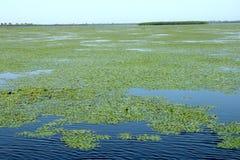 Grande paesaggio nel delta di Danubio, Tulcea, Romania Immagine Stock