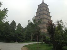 Grande Pagoda selvaggio dell'oca Immagini Stock