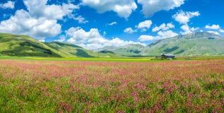 Grande paisaje del verano del piano, Umbría, Italia Imagen de archivo libre de regalías