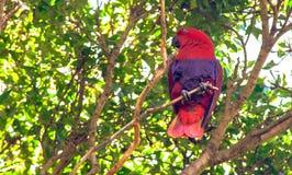 Grande pappagallo circa un brunch nello zoo fotografia stock