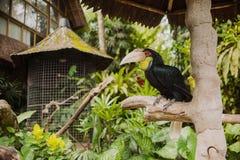 Grande pappagallo nero Fotografie Stock