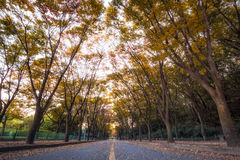 Grande parco di Incheon all'autunno Immagine Stock