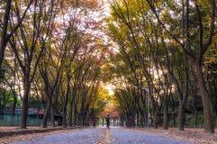 Grande parco di Incheon all'autunno Immagine Stock Libera da Diritti
