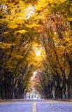 Grande parco di Incheon all'autunno Fotografia Stock