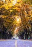 Grande parco di Incheon all'autunno Fotografia Stock Libera da Diritti