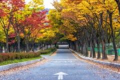 Grande parco di Incheon durante l'autunno Fotografia Stock
