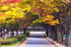 Grande parco di Incheon durante l'autunno Immagine Stock Libera da Diritti