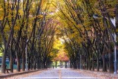 Grande parco di Incheon durante l'autunno Fotografia Stock Libera da Diritti
