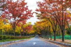 Grande parco di Incheon durante l'autunno Fotografie Stock Libere da Diritti