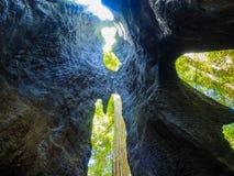 Grande parco di stato delle sequoie del bacino Fotografia Stock
