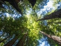 Grande parco di stato delle sequoie del bacino Fotografie Stock Libere da Diritti