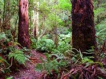 Grande parco nazionale Australia di Otway fotografia stock