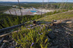 Grande parco nazionale prismatico di Yellowstone Immagini Stock