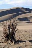 Grande parque nacional de dunas de areia Imagem de Stock