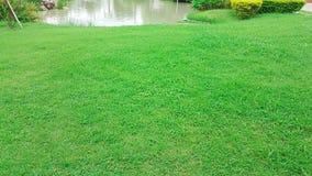 Grande pelouse avec l'étang dans le jardin Image stock