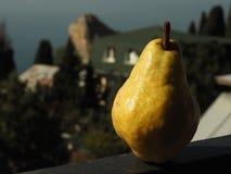 Grande pera gialla sul balcone al sole Fotografie Stock